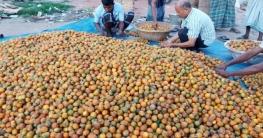 সুপারির বাম্পার ফলন : বাজারমূল্য ৩৫০ কোটি টাকা