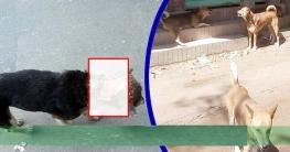 লক্ষ্মীপুরে কুকুর আতঙ্ক : স্বাস্থ্য ঝুঁকির আশঙ্কা