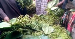 রায়পুরে আগামীকাল থেকে খোলা মাঠে চালু হচ্ছে পানের বাজার