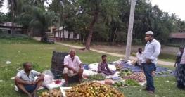 কমলনগরে হাজির হাট  কাঁচা বাজার মাদ্রাসা  মাঠে স্থানান্তর