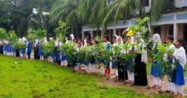 চাঁদপুরের শাহারাস্তিতে ১০ কি.মি. বাগান সৃজন সম্পন্ন